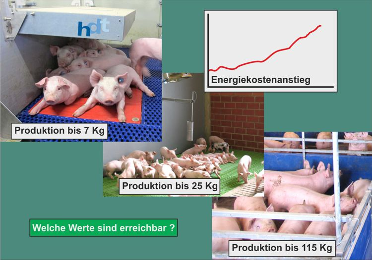 Energy Costs in Pig Farming